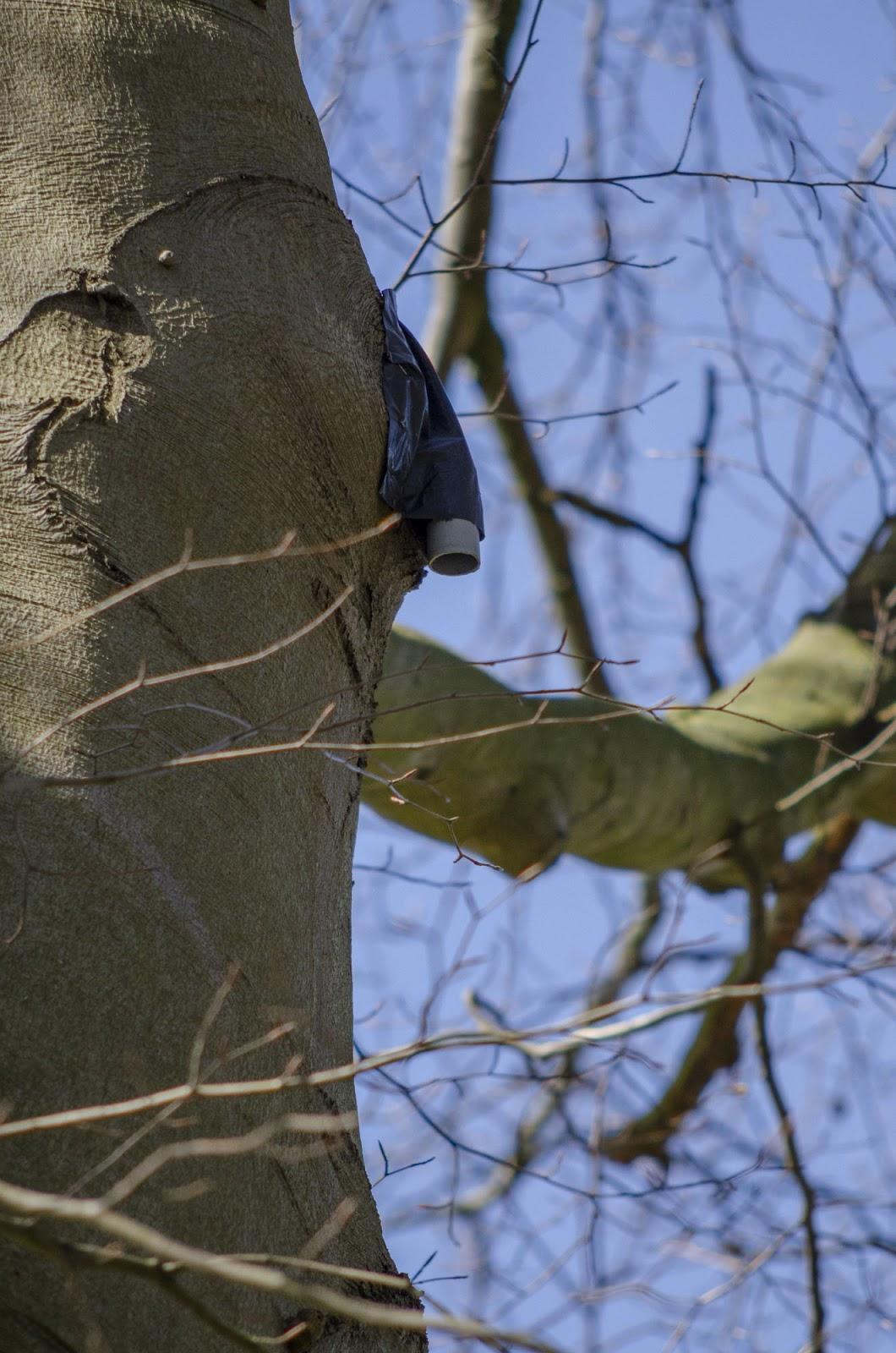 Vleermuisexclusie aangebracht aan een voor vleermuizen geschikte boomholte in de Dreef in de Holleweg, Boechout